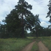 Участок Акколь 10 соток,  лес.